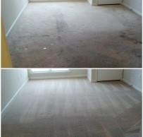 Apartment carpet cleaning