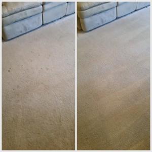 Drink spots in carpet